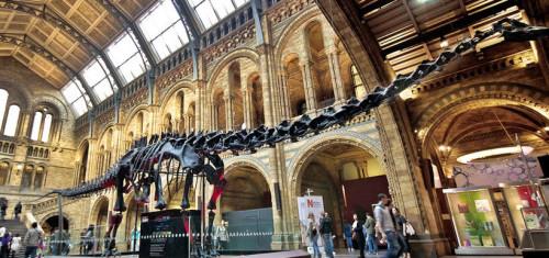 museu natural historia